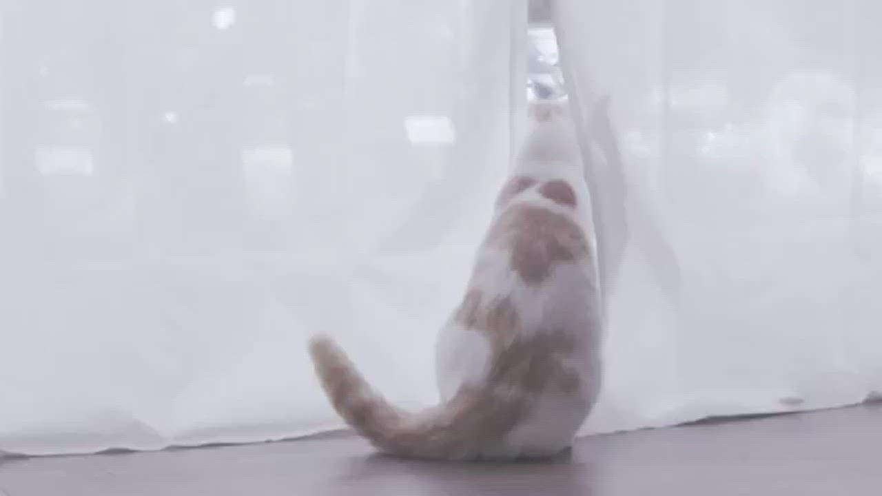 喵屋-貓滾滾(綠/藍/粉紫三色) 耐抓耐磨耐重厚實 貓屋 貓窩 貓抓屋 貓跳台 貓玩具 貓紙箱 瓦楞紙 -MIT台灣製造 專利結購 DIY簡易組裝-可當睡窩 無漂白劑環保材質 product video thumbnail